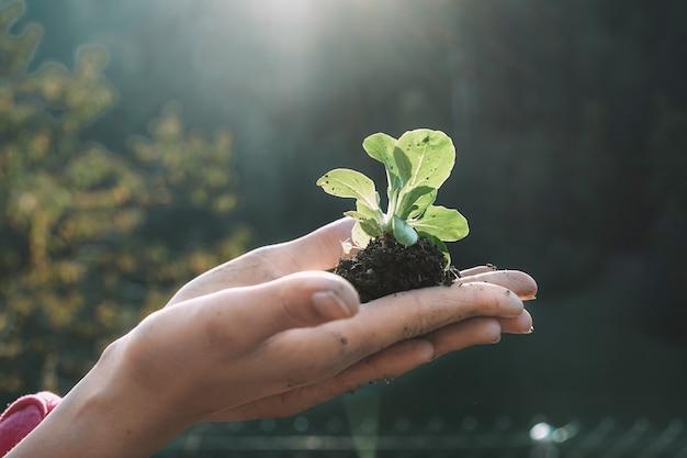 Mains de femme plantant une graine dans le jardin