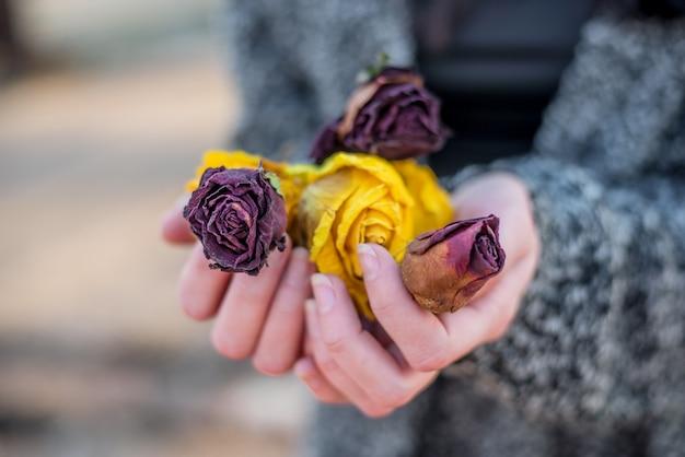 Mains de femme tenant des fleurs séchées de roses rouges et jaunes