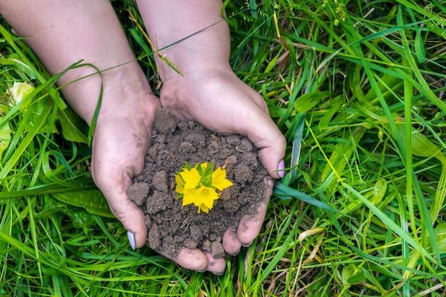 Mains de femme tenant une pousse de plante jaune verte avec de la terre, au sol sur fond de nature d'herbe. concept écologique, biologique, écologique, zéro déchet. vue de dessus.