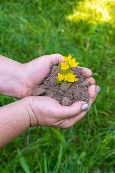 Mains de femme tenant une pousse de plante jaune verte avec de la terre, au sol sur fond de nature d'herbe. concept écologique, biologique, écologique, zéro déchet.