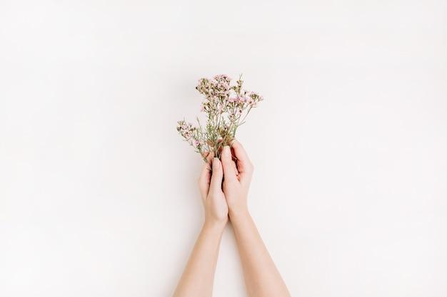 Les mains de femme tiennent des fleurs sauvages sur fond blanc. mise à plat, vue de dessus