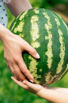 Les mains des femmes donnent de la pastèque entière aux mains d'un enfant en gros plan de la récolte des pastèques