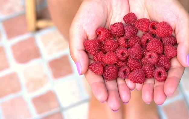 Mains de femmes tenant des framboises fraîches et rouges recueillies dans le jardin.