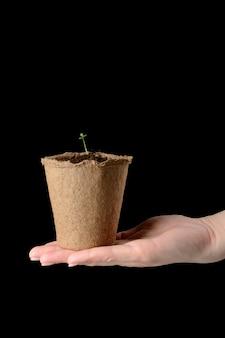 Les mains des femmes tiennent un pot de tourbe avec des semis
