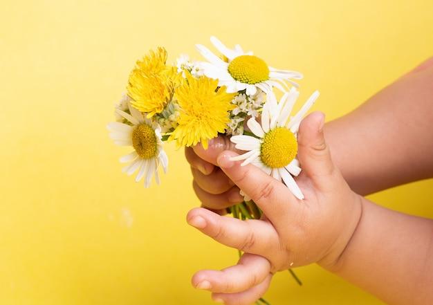 Mains avec des fleurs de marguerite à la camomille