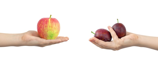Mains avec des fruits mûrs et frais, pomme rouge et prune, bannière, isolé sur fond blanc photo