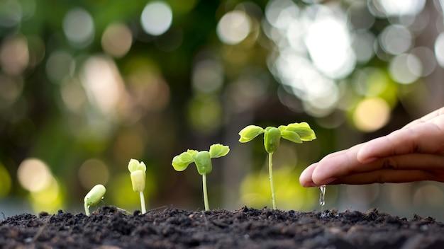 Les mains de l'homme arrosant les petites plantes