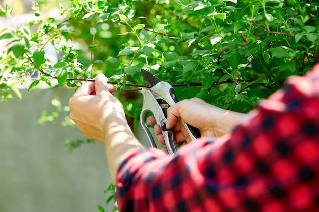 Les mains de l'homme coupe les branches des buissons avec des ciseaux d'élagage à la main.