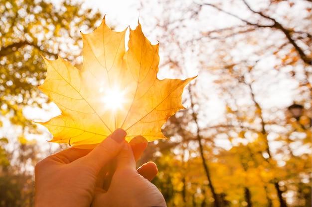 Les mains de l'homme et de la femme tiennent une feuille d'érable avec un trou avec le soleil qui brille à travers dans le parc.