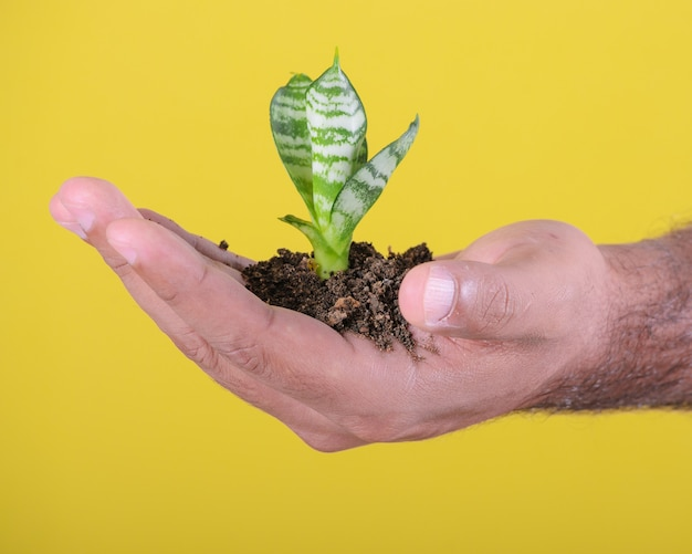 Mains d'homme montrant une petite plante