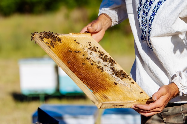 Les mains de l'homme montre un cadre en bois avec des nids d'abeilles
