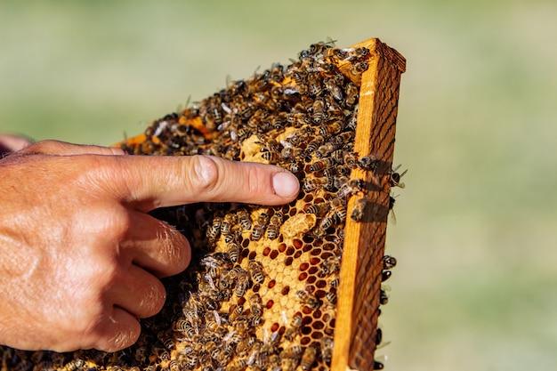 Mains de l'homme montre un cadre en bois avec des nids d'abeilles