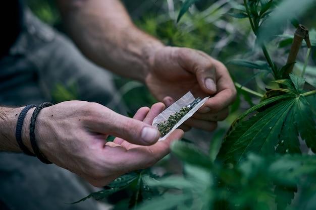 Les mains d'un homme roulant un joint de marijuana près de la plante de cannabis