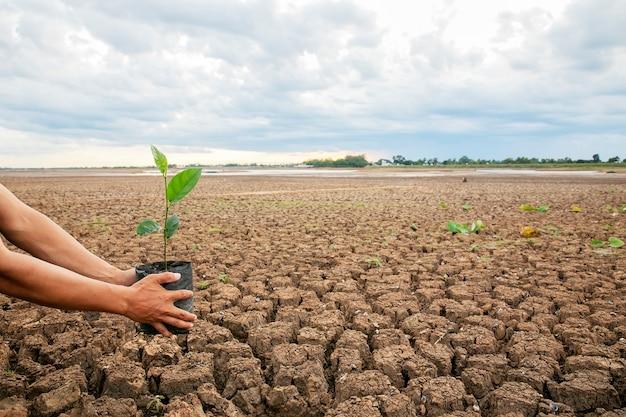 Les mains des hommes plantent des arbres sur des zones sèches. le sol est cassé dans l'air chaud. et avoir un espace pour la saisie de texte
