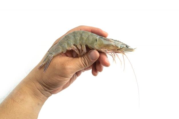 Les mains des hommes tiennent des crevettes blanches du pacifique crues fraîches sur fond blanc.
