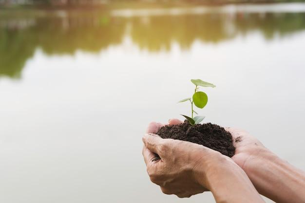 Mains humaines sur le concept de vie petite plante verte. concept d'écologie.