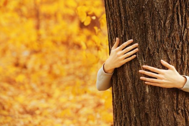 Mains humaines étreignant l'arbre dans le parc