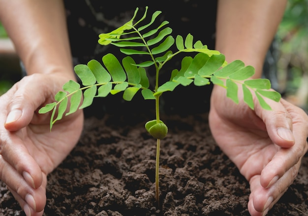 Mains humaines protégeant le concept de vie de la petite plante verte. concept de l'écologie.