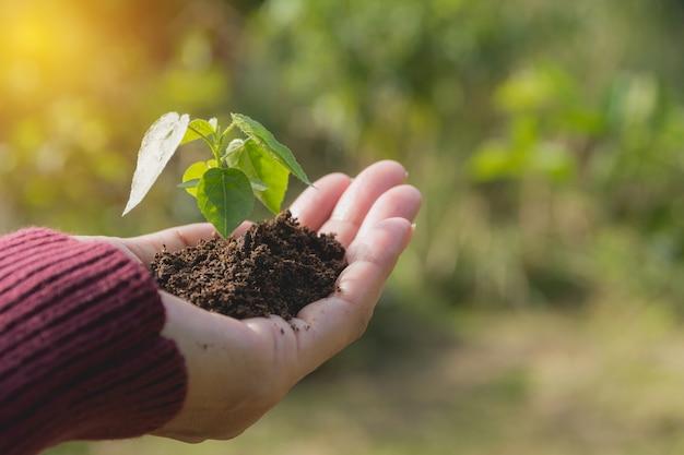 Mains humaines, tenant le concept de vie de la petite plante verte. concept de l'écologie.
