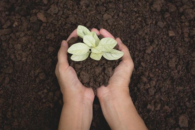 Mains humaines, tenant le concept de vie de petite plante verte. concept d'écologie.