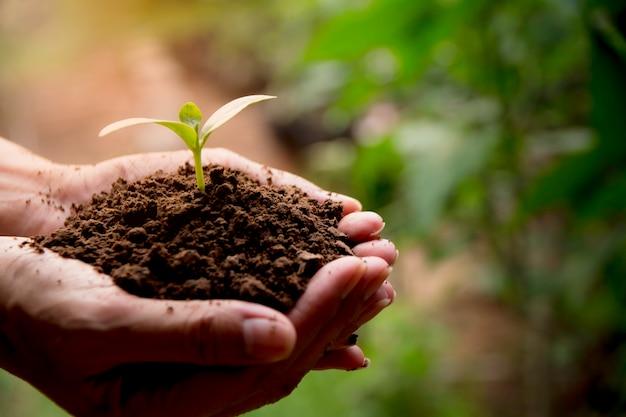 Mains humaines, tenant le concept de vie végétale verte petit
