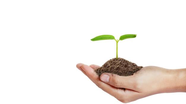 Mains humaines tenant jeune plante germée isolée