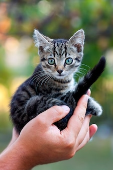 Mains humaines tenant joli petit chaton