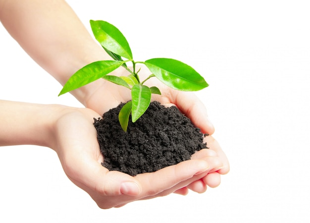 Mains humaines tenant un nouveau concept de vie de petite plante verte