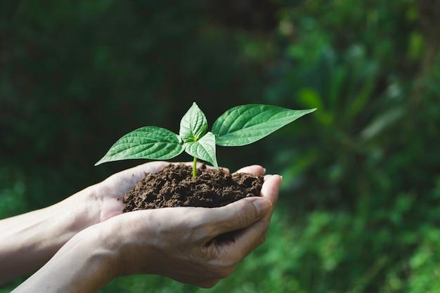 Mains humaines tenant une petite plante verte avec la surface. la vie et l'écologie.