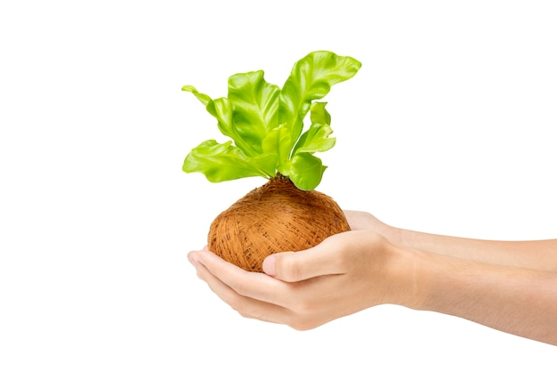 Mains humaines, tenue, jeune, plante verte, dans, les, pots