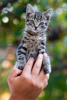 Mains humaines, tenue, joli, petit chaton