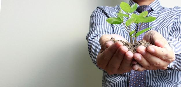 Mains humaines, tenue, pousse, jeune, plante