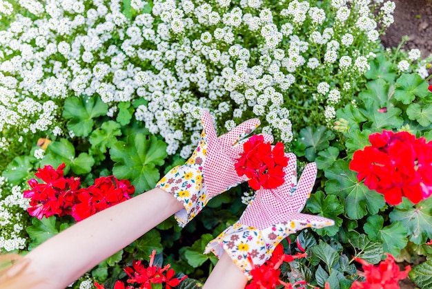 Mains de jardinier dans la plantation de gants