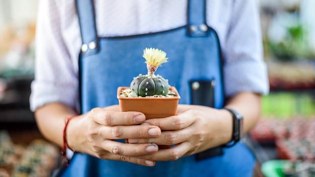Mains de jardinier de femme tenant le cactus dans le jardin de serre chaude