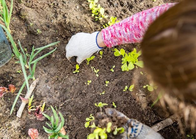Les mains d'un jardinier en gants de ménage plantent des semis de jeunes pousses de plantes dans le sol dans une serre. le printemps