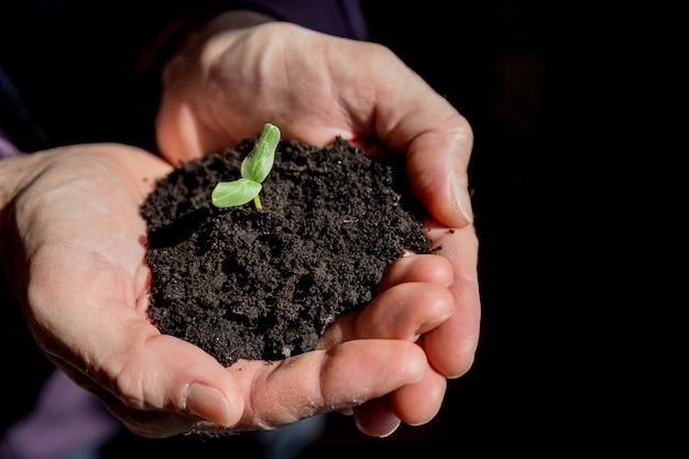 Mains mâles tenant jeune plante. concept d'écologie.mains tenant le sol avec un jeune arbre. jour de la terre, les semis poussent dans le sol, la plantation d'arbres pour réduire le réchauffement climatique, de nouveaux semis poussent du sol