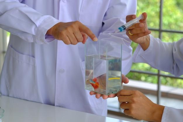 Mains médecin tenant une seringue pour analyser de beaux poissons thaïlandais dans un réservoir d'eau.