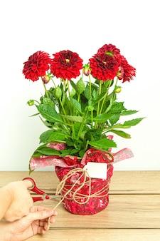 Mains de la personne coupant un ruban sur un beau bouquet enveloppé de dahlias rouges avec carte vierge
