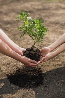 Mains plantant l'arbre