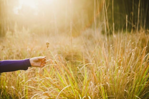 Mains avec une poignée de feuilles séchées et de fleurs de la forêt