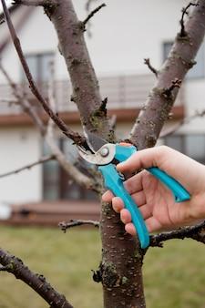 Mains avec sécateur élagage des arbres au printemps