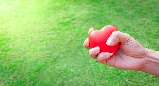 Mains serrées avec coeur rouge, à l'arrière-plan d'un jardin d'herbe vert vif