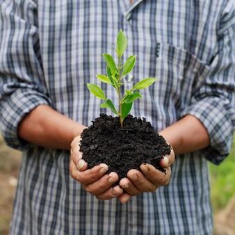 Mains tenant une jeune plante verte.
