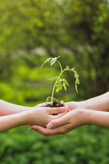 Mains tenant une petite plante