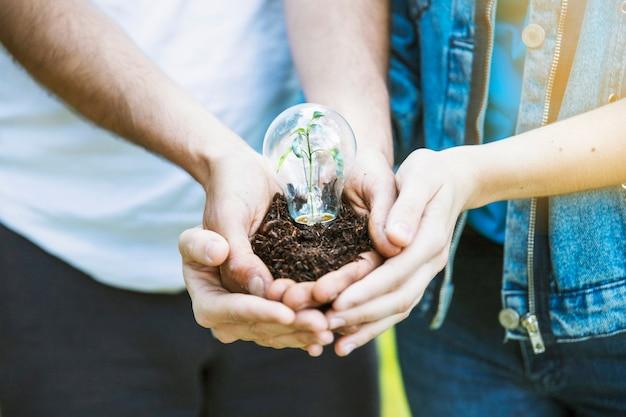 Mains tenant la plante dans la lampe sur le sol