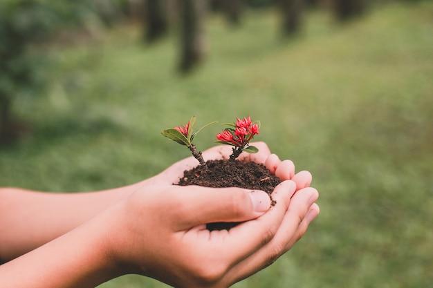 Mains tenant une plante à graines avec forêt floue