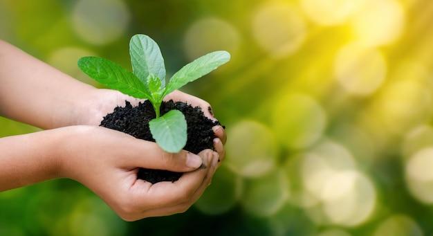 Mains tenant des plants en croissance