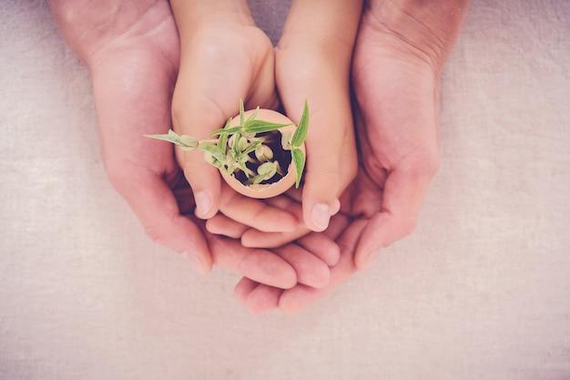 Mains tenant des plants dans des coquilles d'œufs, éco-jardinage