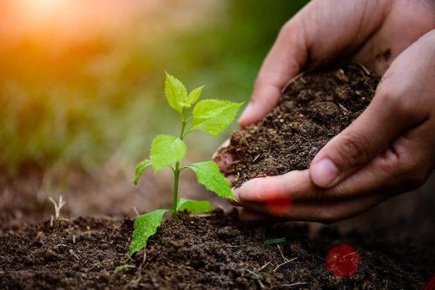 Mains tenant la terre pour planter un jeune arbre. concept du jour de la terre.