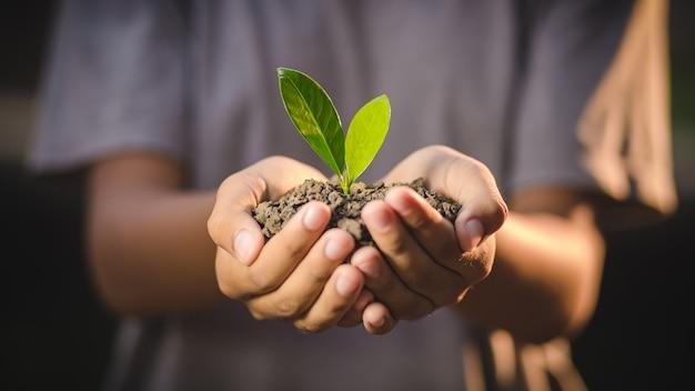 Mains, tenue, jeune, plante